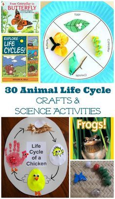 Awesome books, crafts and activities that explore animal & insect life cycles!  Great biology for kids ideas