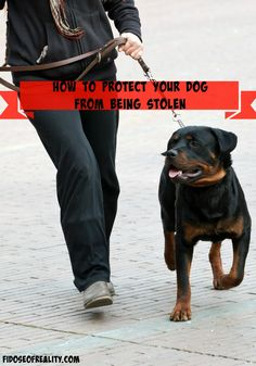 How to Protect Your Dog From Being Stolen - Fidose of Reality