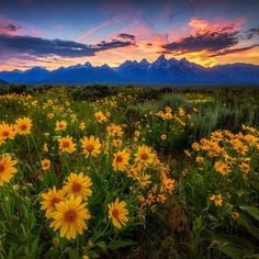 """50.3k Likes, 286 Comments - U.S. Department of the Interior (@usinterior) on Instagram: """"Happy first day of summer from #GrandTeton #NationalPark in Wyoming. Photo @grandtetonnps by Manish…"""""""