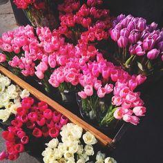 Primavera colorata