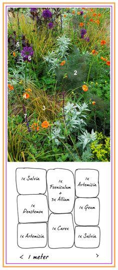 Green Border with Purple & Orange ..................... 1. White Sagebrush 'Silver Queen' (Artemisia ludoviciana)  2. Sweet Fennel 'Giant Bronze' (Foeniculum vulgare)  3. Sedge 'Evergold' (Carex oshimensis)  4. Avens 'Borisii' (Geum coccineum)  5. Beardtongue 'Husker Red' (Penstemon digitalis)  6. Allium 'Purple Sensation'  7. Woodland Sage 'Caradonna' (Salvia nemorosa)