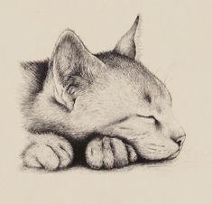 #CatDibujo