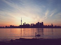 Post with 0 votes and 31 views. Took this while at a picnic on the island. Anyone missing summer as much as I am? Cn Tower, Trending Memes, Toronto, Funny Jokes, Picnic, Canada, Community, Island, Sunset