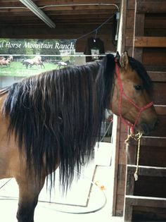 Regalo zero to bareback and bridleless in less than 6 minutes