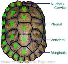 ATP - Basic Turtle Information