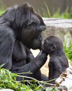 sweet wild baby animals