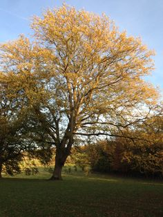 Crunchy leaves, vibrant colours and the freedom to explore, this is Gibside - a fabulous place to visit with kids in the Autumn