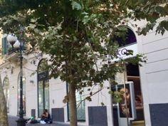 Dillo a #NapoliTime  Vomero: un albero con rami spezzati in via Scarlatti