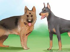 3 Ways to Train a Guard Dog