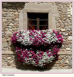 Flowers on balcony by Xavier Fargas