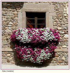 Flowers on balcony by Xavier Fargas