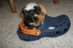 Denver Bronco's fan.. I wear mine every season too....I'm not nearly as cute :-(