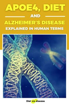 The number of Americans with Alzheimer's disease will reach a staggering 14 million by 2050. Certain factors contribute to risk, including lifestyle, diet and genetics… In particular a genetic variant known as APOE4. This article attempts to explain the link between diet, the APOE4 gene and Alzheimer's in plain English. #dietitian #nutritionist #nutrition #health
