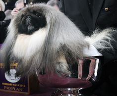 25 Descriptions of the Strange Beast that Won the Westminster Dog Show // Gawker