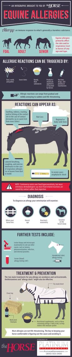 [INFOGRAPHIC] Equine Allergies - Learn more about allergic reactions in horses with this step-by-step visual guide. My Horse, Horse Love, Pretty Horses, Beautiful Horses, Horse Care Tips, Horse Anatomy, Horse Facts, Animal Science, Horse Quotes