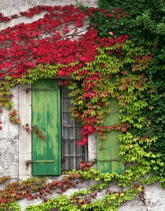 House wall with Wooden window surrounded by plants.