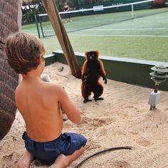 Necker Island : Lemurs everywhere!  #NeckerIsland
