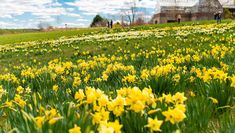 Between going on a hiking adventure or simply stopping to smell the roses, spring in Central Massachusetts is all about our love of nature. Check out these top 7 destinations for all things Spring Bloom!  https://www.discovercentralma.org/articles/top-7-places-to-watch-spring-bloom/?utm_term=0_101e2ecbf8-e30159bfb9-