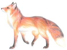 Flames of a Fox by PoonieFox on DeviantArt