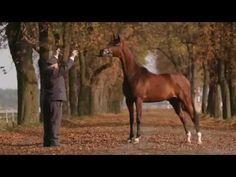 ARABIAN HORSE DAYS Janów Podlaski 2014: Invitation - YouTube