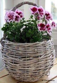 Taigaduu: Vauvan sukat ja tumput Wicker Baskets, Plants, Home Decor, Decoration Home, Room Decor, Plant, Home Interior Design, Planets, Home Decoration
