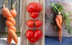 Sauvons les légumes moches