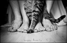 Family + cat feet