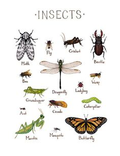 This piece is done in watercolor, and features insects. Insects included are: Ant Bee Beetle Butterfly Caterpillar Cicada Cricket Dragonfly Fly Grasshopper Ladybug Mantis Mosquito Moth Wasp It is prin
