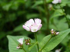 野に咲く小さな花