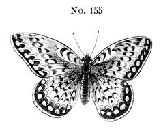 Butterfly No. 155