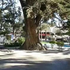 Plaza de Armas de Ovalle, Región de Coquimbo, Chile. #plazadearmasdeovalle #ovalle #regióndecoquimbo #chile #plaza #square #platz #turismo #tourism #tourismus #旅游