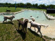 Dog pond Dog Swimming Pools, Dog Pond, Horses, Dogs, Animals, Dog Pools, Animales, Animaux, Pet Dogs