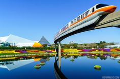 Love this annual event. The Flower and Garden show is now open. Spring is in the air. http://www.wdwmagic.com/events/epcot-international-flower-and-garden-festival/news/02mar2016-photos---2016-epcot-flower-and-garden-festival.htm