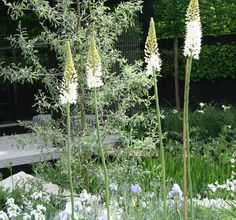 A terrace of flamed granite, featuring a minimalist transparent building of timber and glass overlooking a stylised water creek, offers an all-round view of the garden. The terrace also divides the garden into a sunny, asymmetrical area on one side and a more formal, partly shady area on the other. The lovely tall white spires above are Eremurus himalaicus (Fox tail lily).