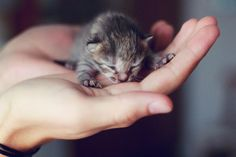 Un-Meow-surable cuteness in the palms of your hand
