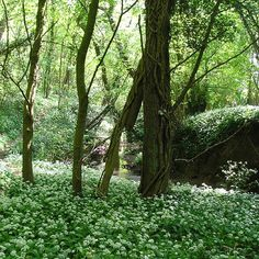 Just down by my sister's house. A walk I like to take in the spring when the wild garlic and bluebells are out.  Photo by Kevin Ashton