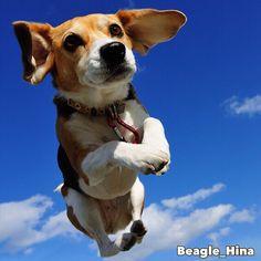 flying like an airplane✈️