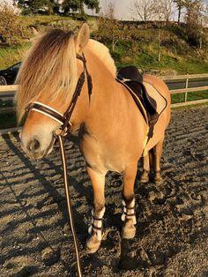 Flott fjordhest selges - video   FINN.no Horses, Animals, Animales, Animaux, Animais, Horse, Words, Animal