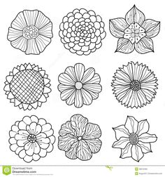 21 black and white flowers clipart vectors download free vector vector collection of hand drawn flowers download from over 53 million high quality stock photos images vectors sign up for free today image 38070499 mightylinksfo