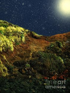 """Beach Cliff in Bloom"" ~ © 2015 RC deWinter ~ All Rights Reserved - A spring night on the coastal cliffs along Phillip Island, Victoria, Australia."