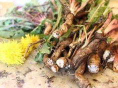 Odkryto roślinę, która zabija komórki rakowe w ciągu 48 godzin!!