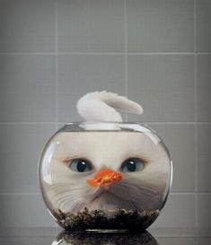 Cat eyes fish