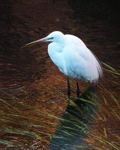 春の小川のたまご鳥。   #bird #鳥