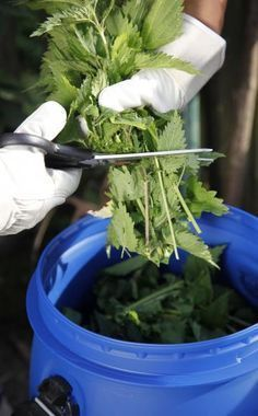 Fix nettle juice correctly - Garten - Garden Patio Plants, All Plants, Garden Planters, Herb Garden, Vegetable Garden, Cement Patio, Flagstone Patio, Diy Garden, Garden Ideas