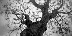 Lomography Belair X Jetsetter & Kodak Tmax 100 by simonesavo - Lomography Lomography, Plants, Movies, Essentials, Inspired, Films, Cinema, Plant, Movie