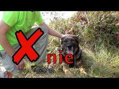 Ako hladit psa, aby bol sebavedomy a odvazny How to Pet a Dog 2017 Dog, Film, Pets, Youtube, Diy Dog, Movie, Film Stock, Doggies, Cinema