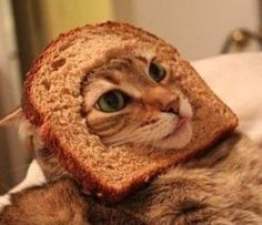 Cat Bread I