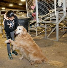 Dakota shakes hands with owner Elizabeth Nelson during a 4-H event at the Cache County Fairgrounds. (Photo by John Zsiray)