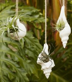 The Cutest Sea Life & Shell Hanging Planter Pots. Featured on Completely Coastal. These seashell hanging planters are perfect to hold air plants and succulents. Succulents Garden, Planting Flowers, Hanging Succulents, Moss Garden, Diy Hanging Planter, Planter Pots, Planter Ideas, Hanging Terrarium, Diy Planters
