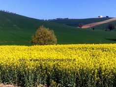 Spring in the Marche - Italy